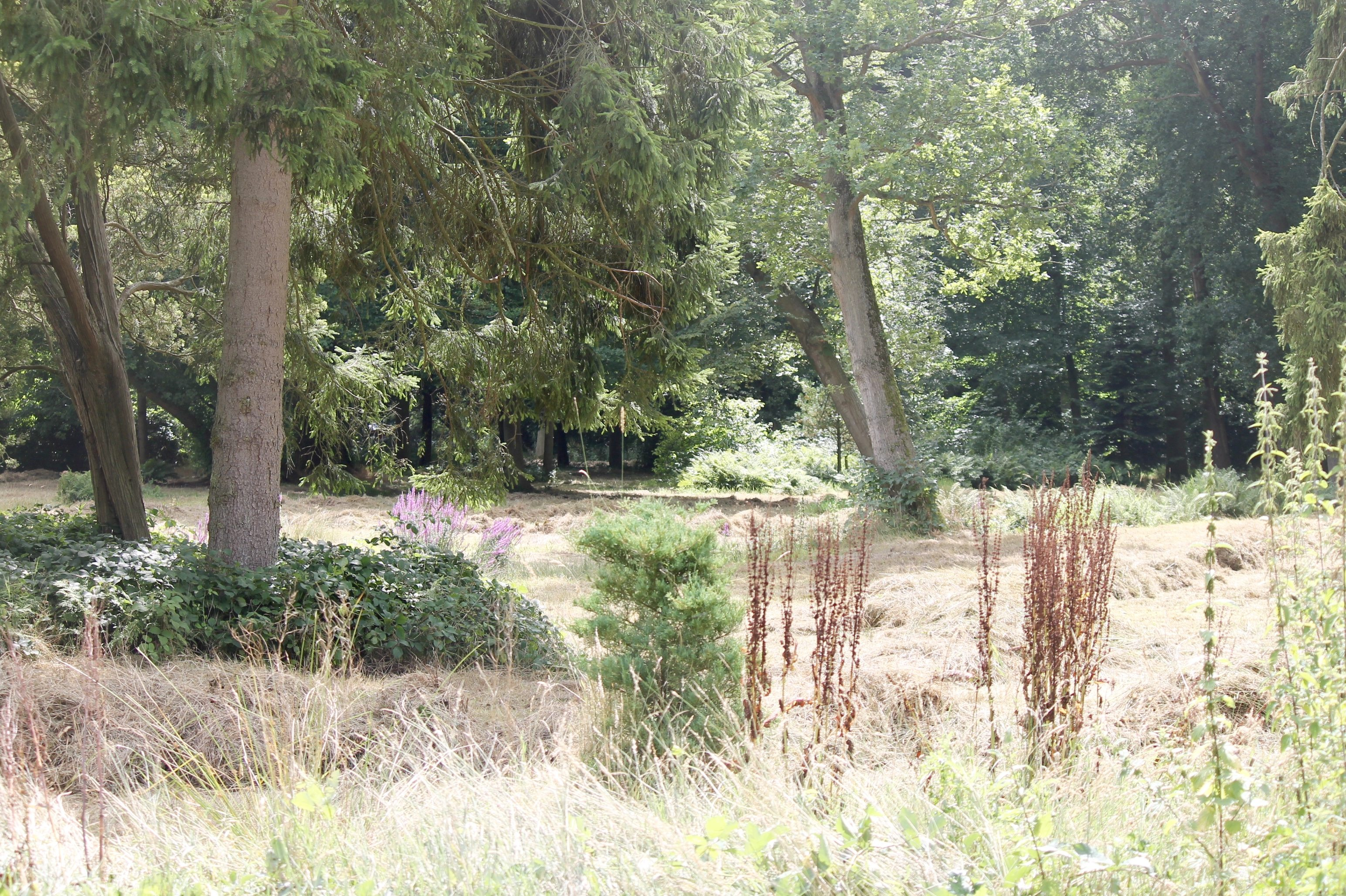 Bos van Krantz