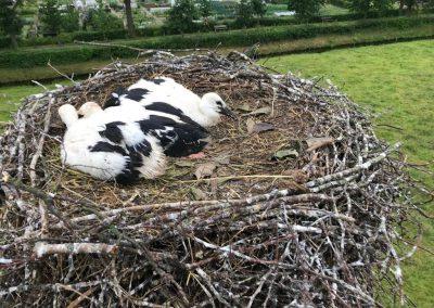 2019-06-14 Warmond nest